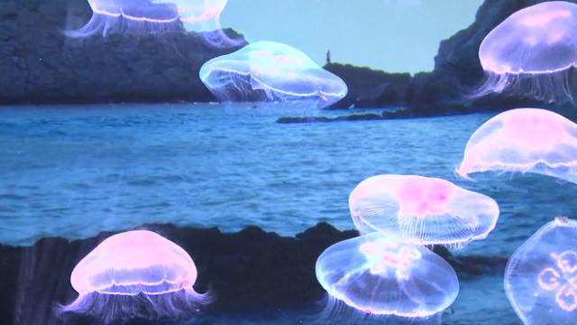 2-le-nano-de-la-meduse