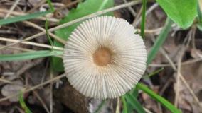 fungi-013-300